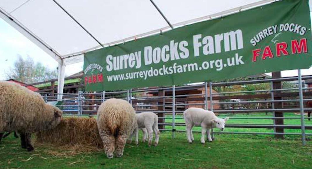 city farm ferme urbaine Londres